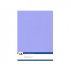 6 Delight Flowers